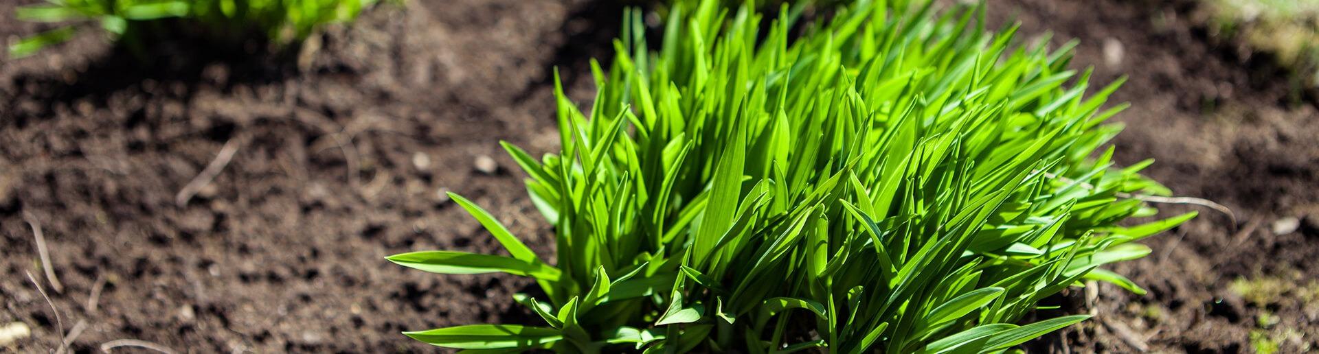 Entretien et Horticulture