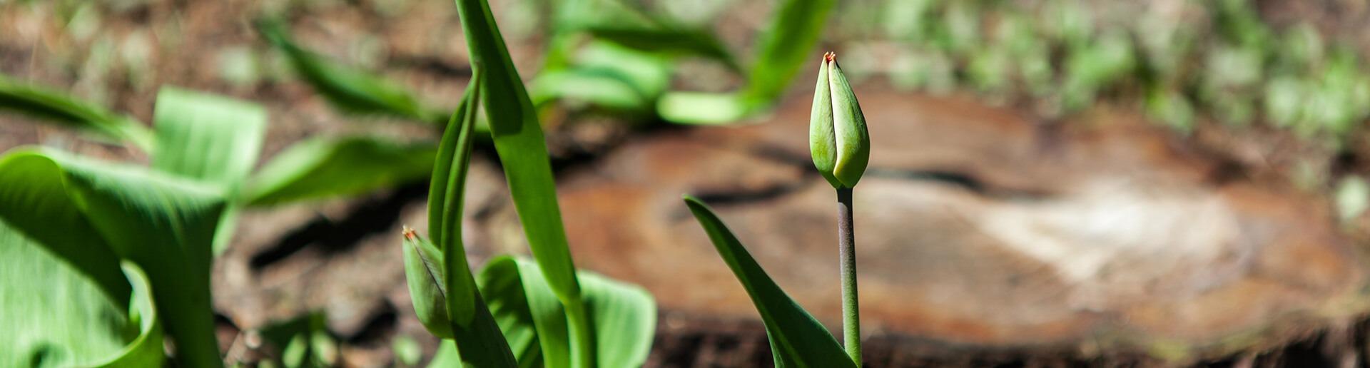 Plantation de bulbes et d'annuelles